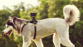 action-cam-dog-mount