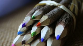 Branch-Twig-Assorted-Colored-Pencils