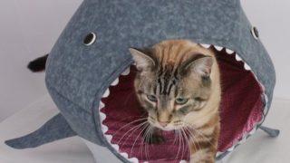 Cat-Shark-Bed-Cat-Bed-Celebrating-Shark-Week-01